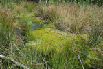 Pool full of Sphagnum, Haaksbergen, The Netherlands
